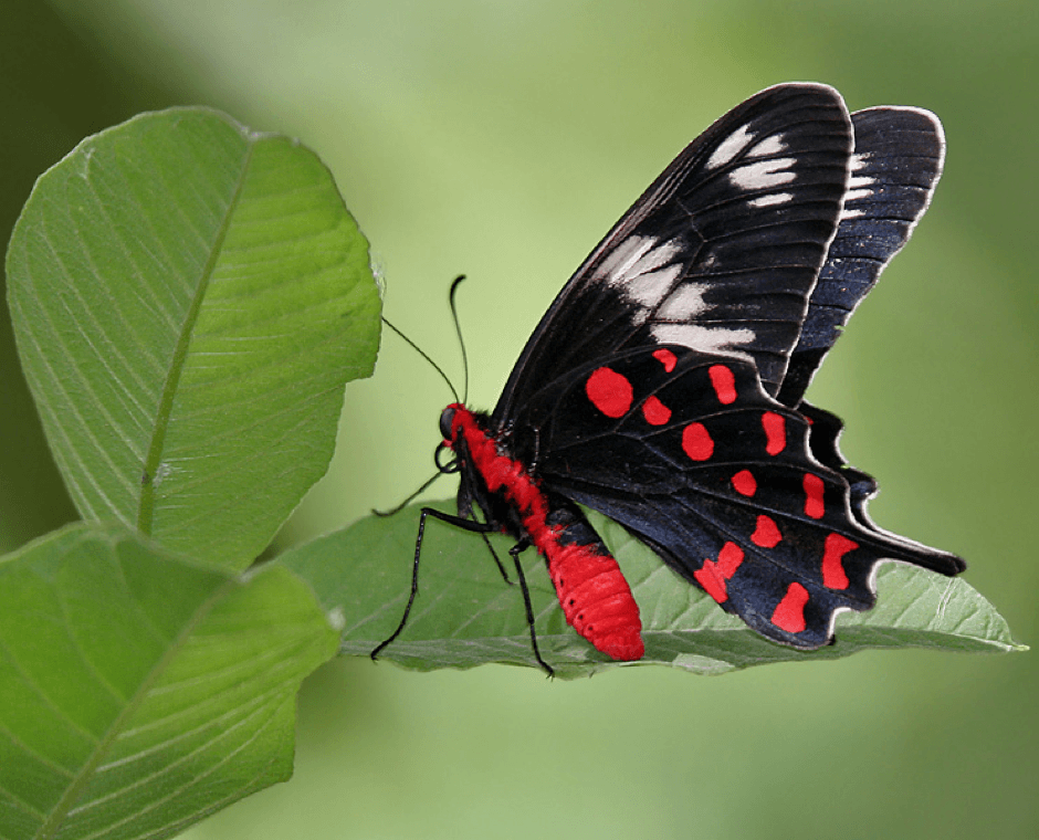 Butterflies from around the world.
