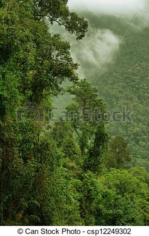 Stock Photography of rainforest gorge in North Queensland.
