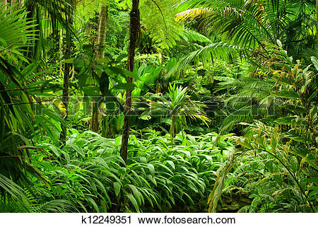 Stock Photography of Tropical Garden in Cairns, North Queensland.