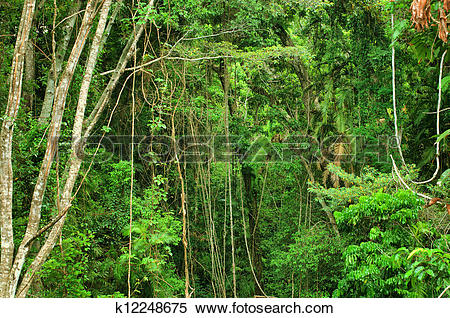 Stock Image of rainforest east of Mareeba, Far North Queensland.