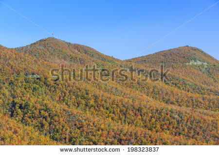 North Carolina State Flower Stock Photos, Images, & Pictures.
