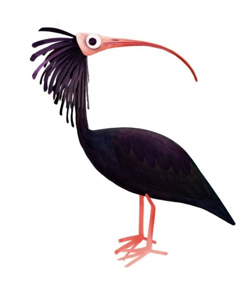 1000+ images about Northern bald ibis on Pinterest.