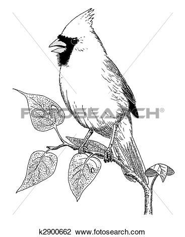 Clip Art of Northern Cardinal k2900662.