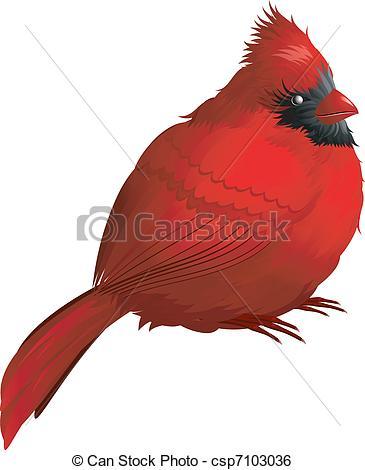 Northern cardinal Vector Clip Art Illustrations. 71 Northern.