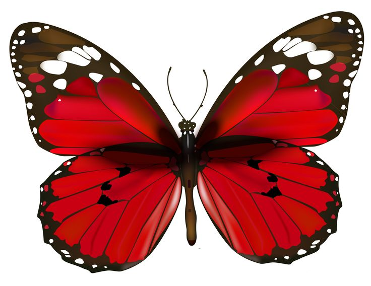 1000+ images about ❧ Butterflies ❧ on Pinterest.
