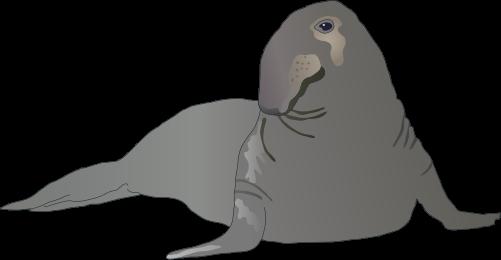 Cartoon Elephant Seal Related Keywords & Suggestions.