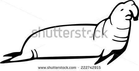 Elephant Seal Stock Photos, Royalty.