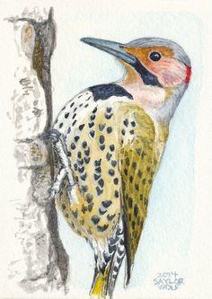 Northern Flicker, Woodpecker, Watercolor Original Painting Art.