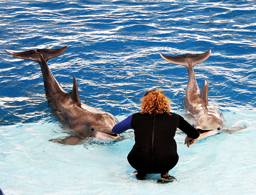Pictures of Dolphins.