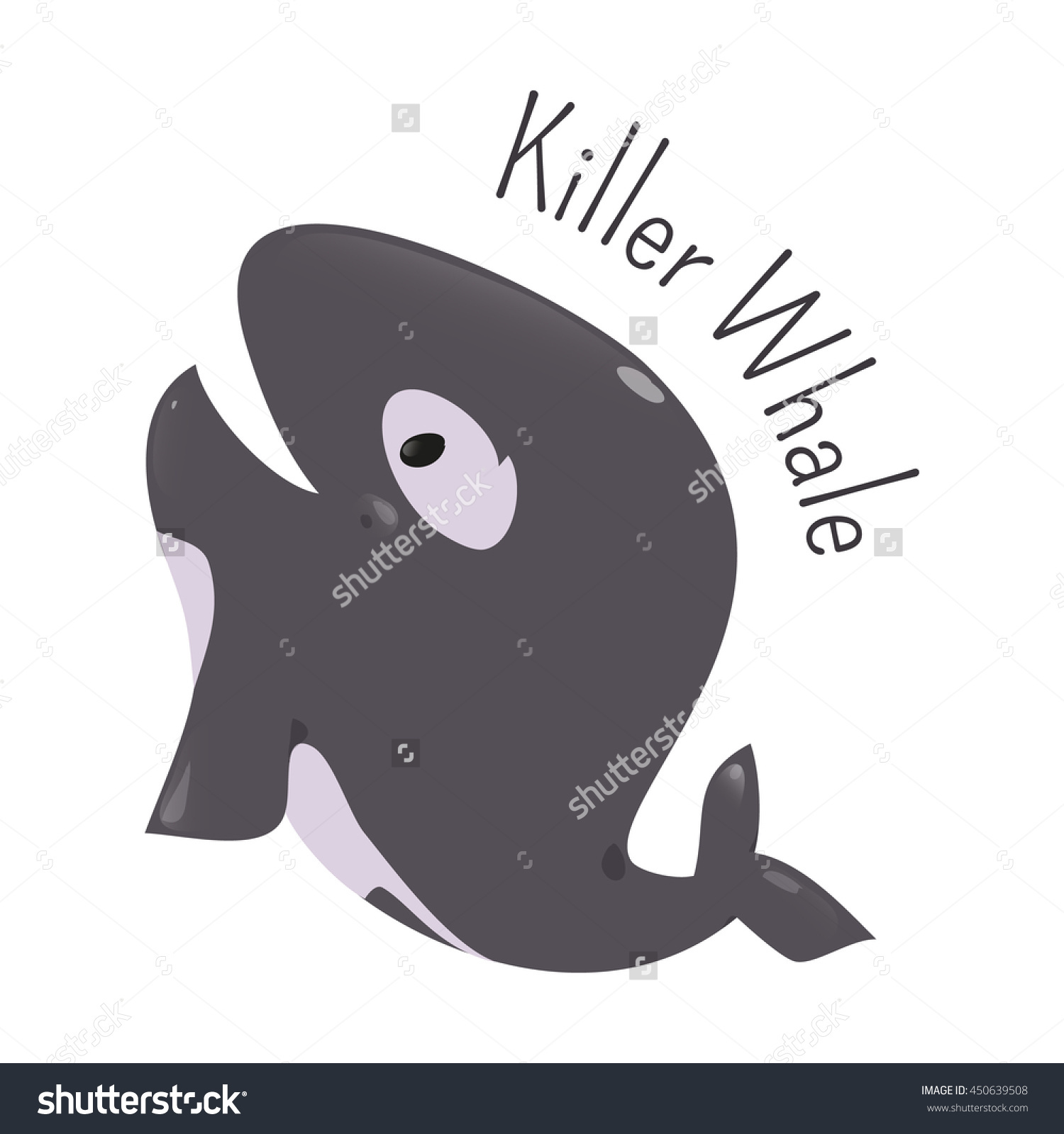 Killer Whale Isolated. Orca. Orcinus. Large Toothed Animal.