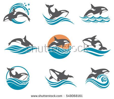 Killer Whale Stock Photos, Royalty.