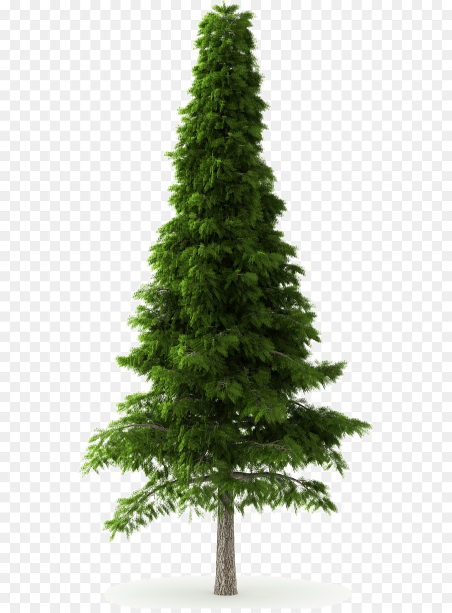Deodar Cedar Himalayas Norway Spruce Tre #46767.