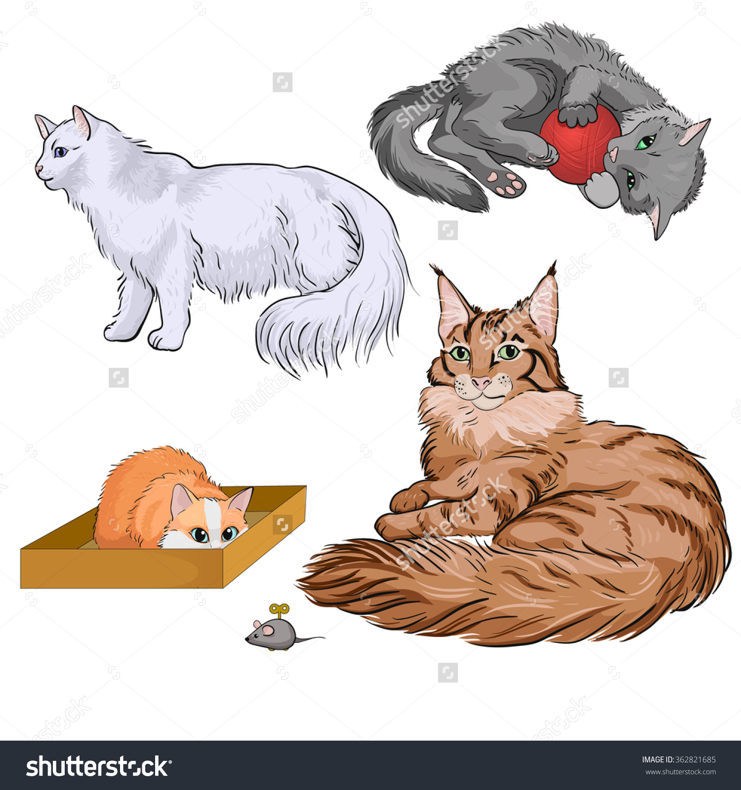 A Set Of Color Cats: Norwegian Forest, Maine Coon, Grey, Red.