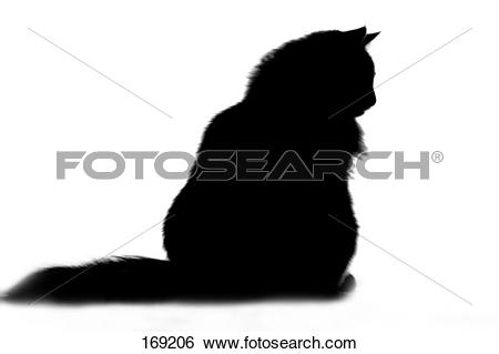 Stock Images of Norwegian Forest Cat. Black adult sitting against.