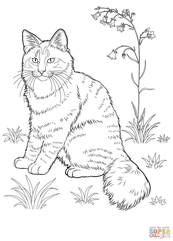 Norwegian Forest Cat coloring page.