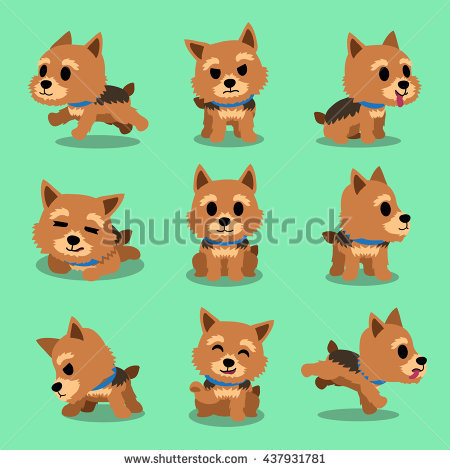 Norwich Terrier Stock Photos, Royalty.