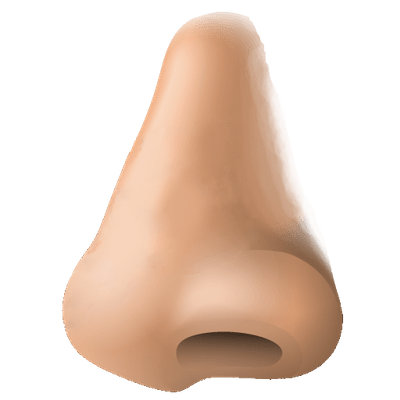 Human Nose Clipart transparent PNG.