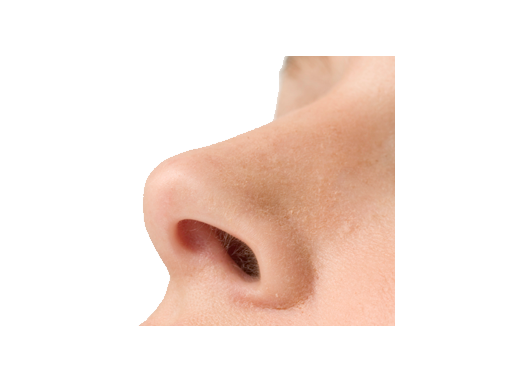 Nose PNG images free download.