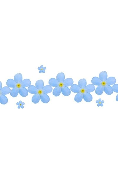 Forget Me Nots Borders Clipart.