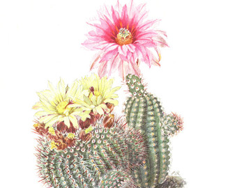 Vintage cactus_illustration.