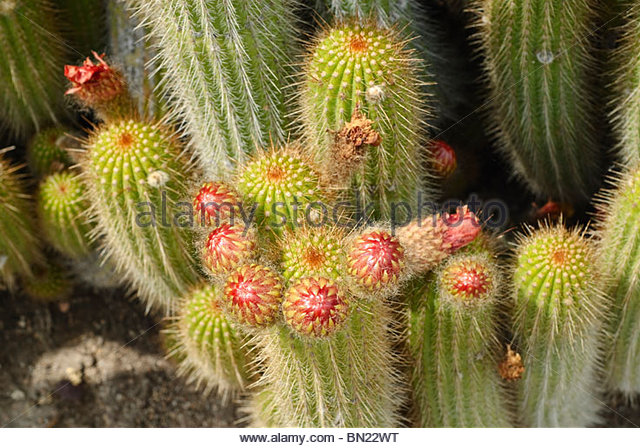 Spine spiny Stock Photos & Spine spiny Stock Images.