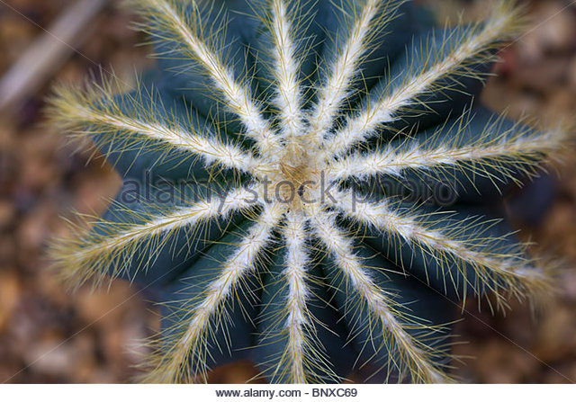 Long Prickly Stock Photos & Long Prickly Stock Images.
