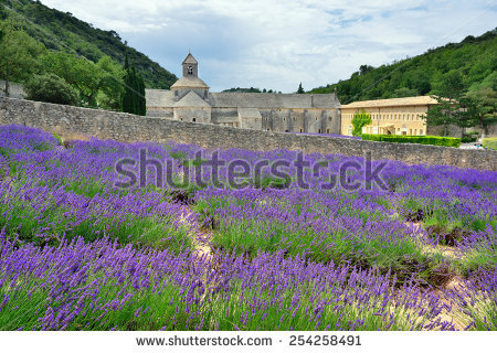 Image Shows Lavender Field Region Provence Stock Photo 104017100.