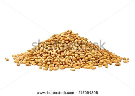 Wheat Grain Stock Photos, Royalty.