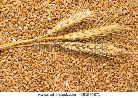 Wheat Grains Stock Photos, Royalty.
