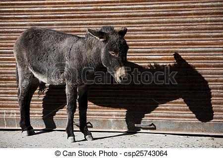 Stock Image of donkey and shadow Nubra valley Ladakh ,India.