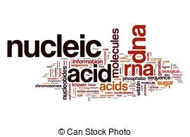 Nucleic acid Illustrations and Clipart. 372 Nucleic acid royalty.