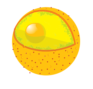 File:Diagram human cell nucleus no text.png.