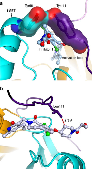 Polycomb repressive complex 2 structure with inhibitor reveals a.