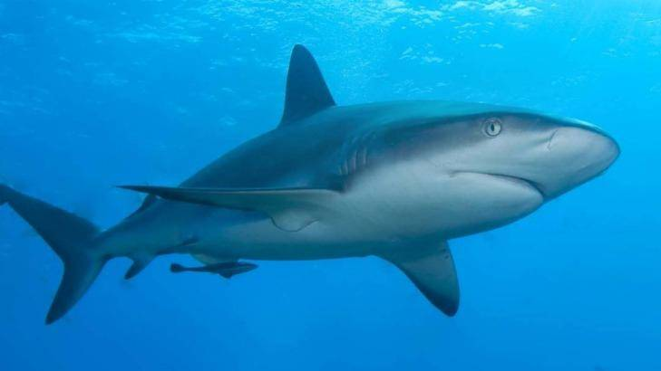 Surfer's board 'nudged' by shark off Mandurah.