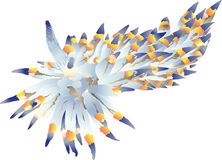 Nudibranch Vector Stock Vector.