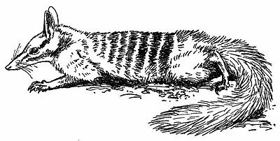 Marsupial Pictures.
