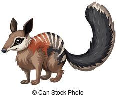 Numbat Illustrations and Clipart. 69 Numbat royalty free.