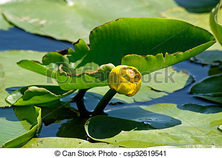 Stock Photo of Yellow water.
