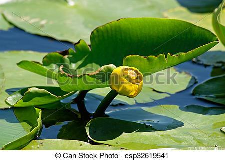 Stock Photo of Yellow water.