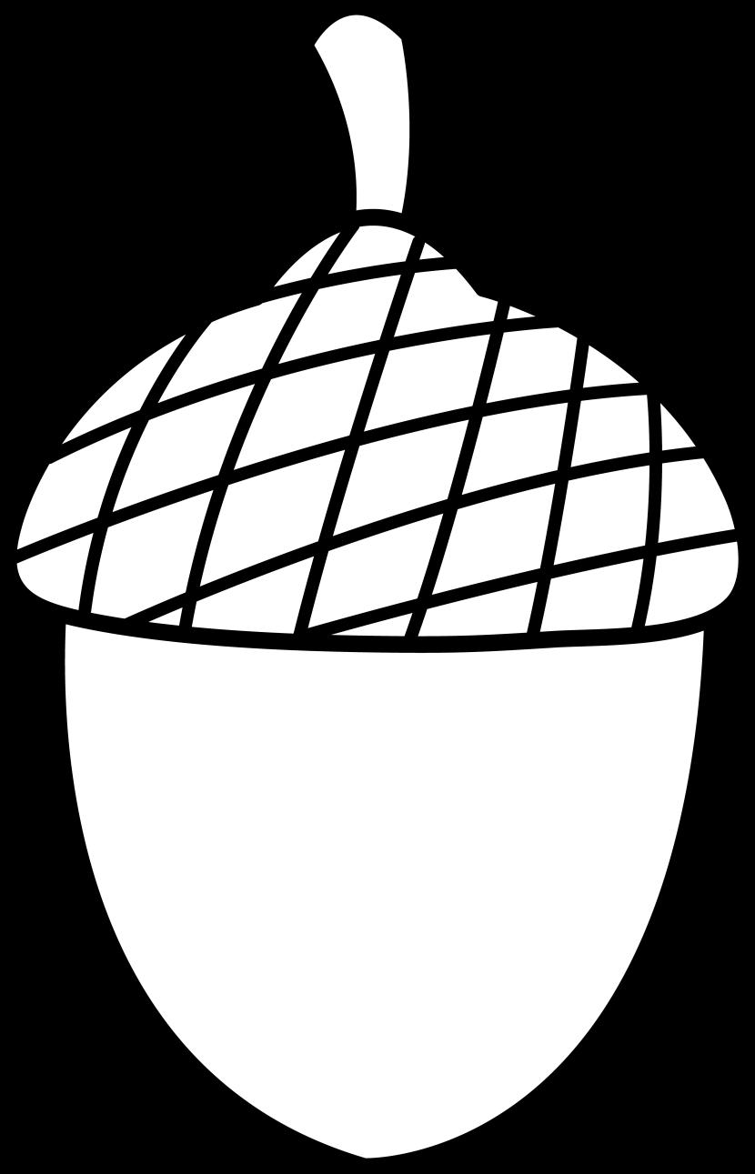 Clip art acorn nuts.