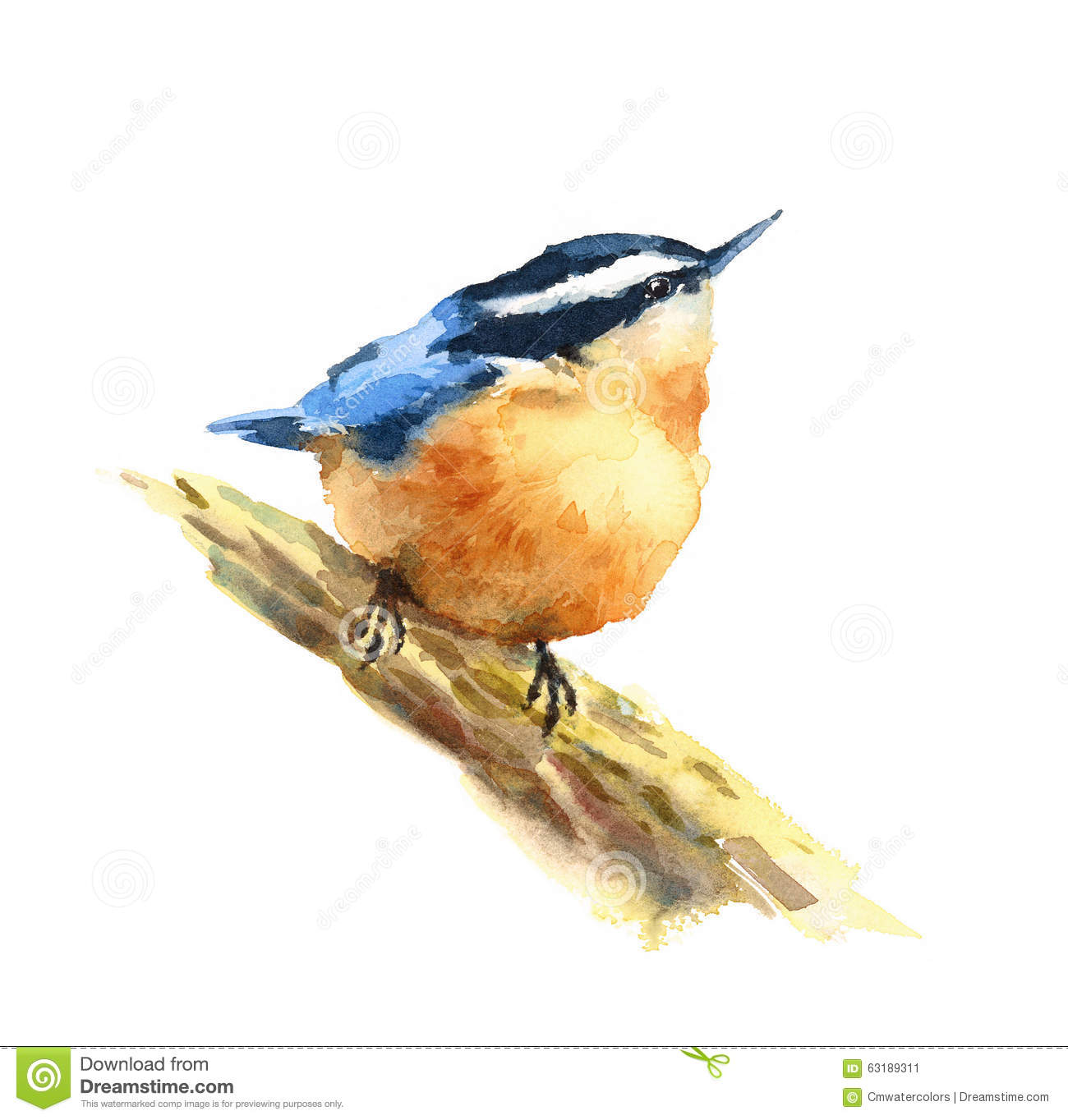 Nuthatch Bird Watercolor Illustration Hand Drawn Stock.