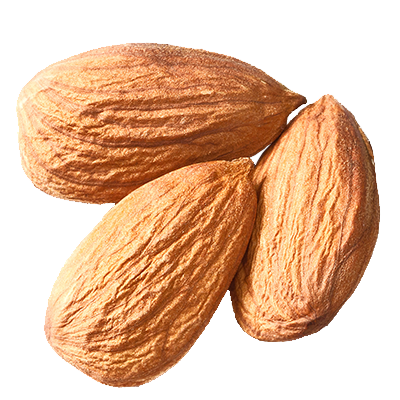 Almond PNG images free download.