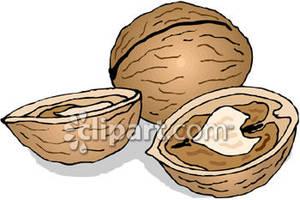 Nut Shell Clip Art.