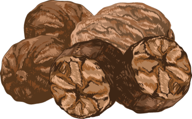 Nutmeg Clip Art Related Keywords & Suggestions.
