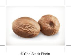 Nutmeg Illustrations and Stock Art. 444 Nutmeg illustration and.