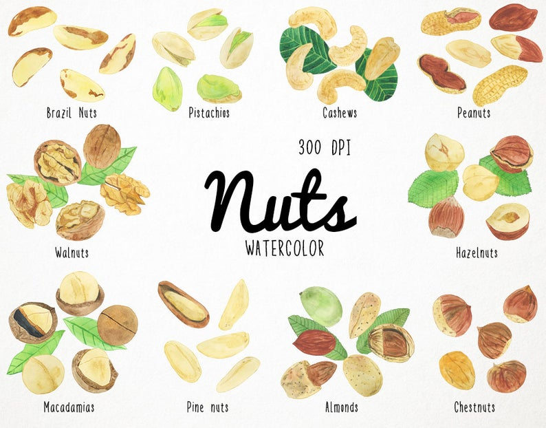 nuts clipart, food clipart, watercolor clipart, nut watercolor, watercolor  nuts, nuts clip art, almond clipart, watercolour almond pistachio.