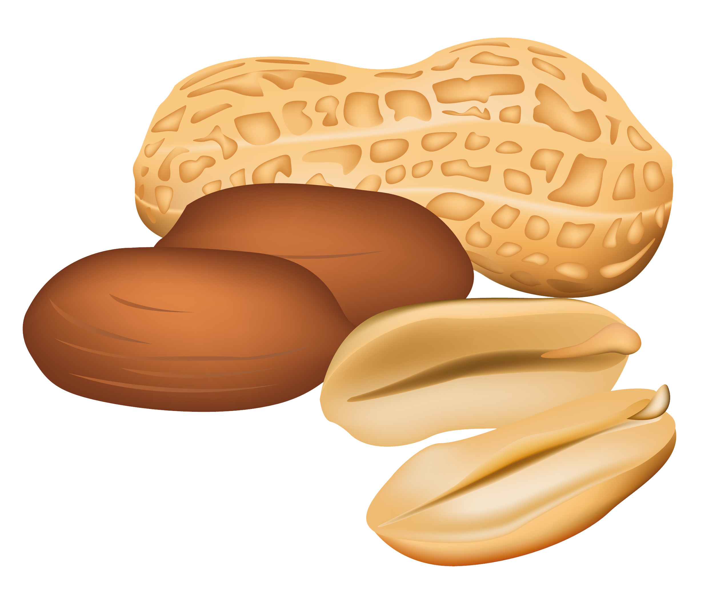 Nuts Clipart.