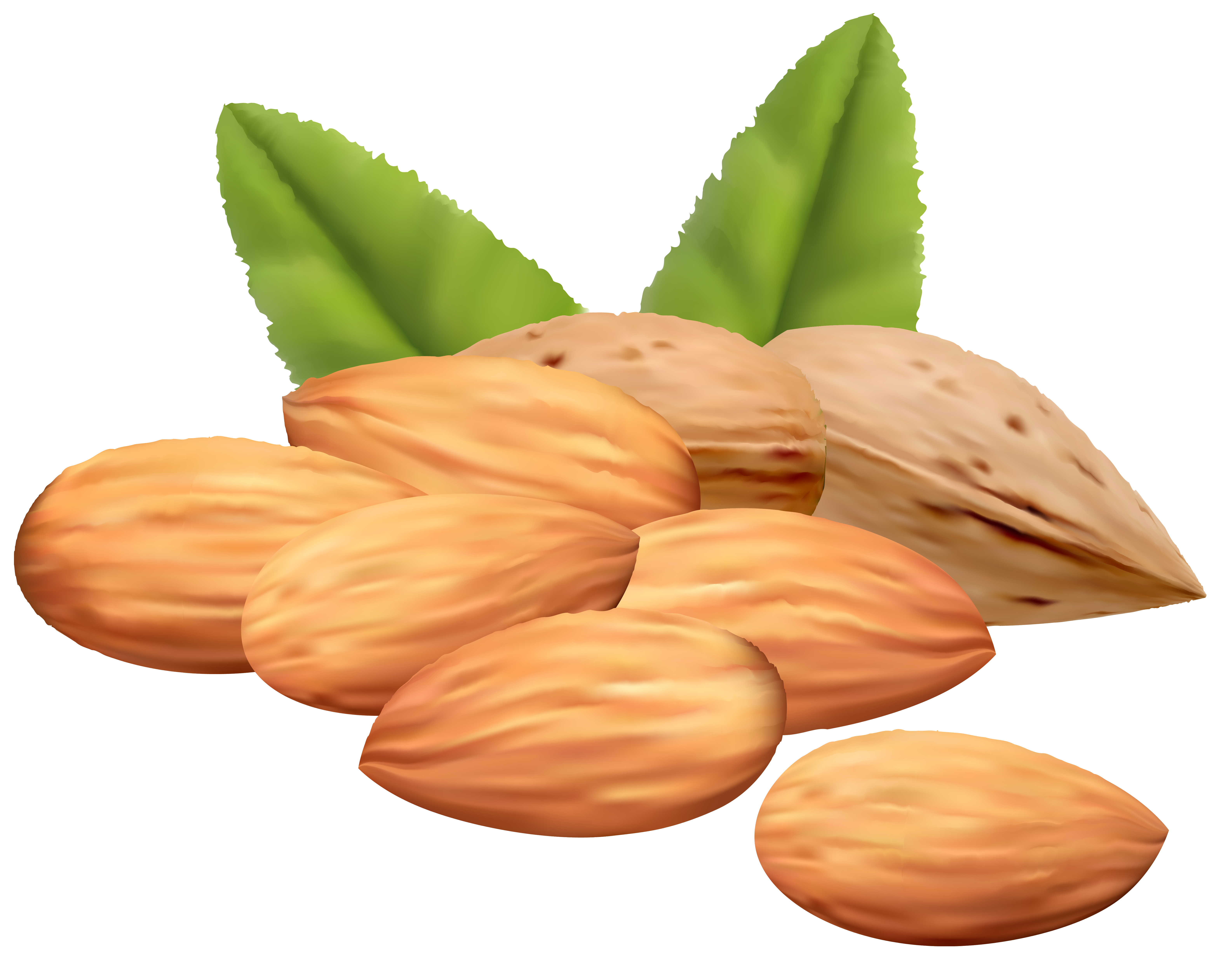 Images of nuts clipart.