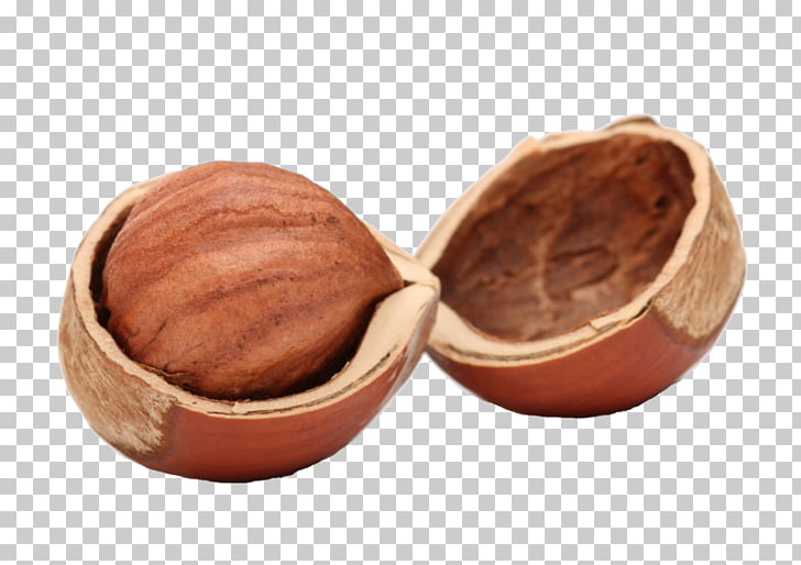 Hazelnut Walnut Nutshell , walnut PNG clipart.