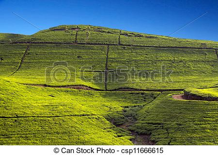 Stock Photography of Sri Lanka tea garden mountains in nuwara.
